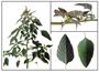 Tác dụng chữa bệnh của cây rau dền gai: chữa khí hư