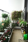 Trồng hoa gì trên ban công để quanh năm rực rỡ